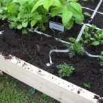 Square Foot Garden Update–Critters?