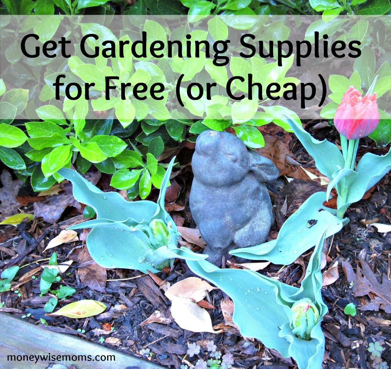 Get Gardening Supplies for Free or Cheap Moneywise Moms