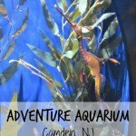 Adventure Aquarium {Camden, NJ – Philadelphia}