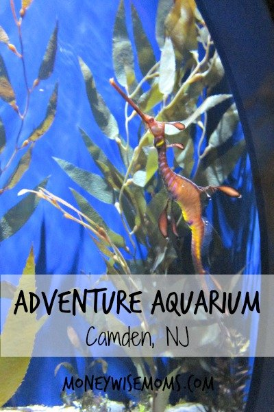 Adventure Aquarium in Camden, NJ (next to Philadelphia) | Fabulous #familytravel destination | MoneywiseMoms