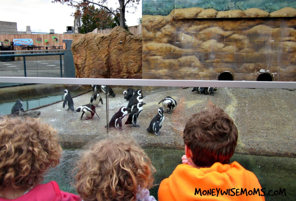 Penguins at Adventure Aquarium in Camden, NJ (next to Philadelphia) | Fabulous family destination #familytravel | MoneywiseMoms