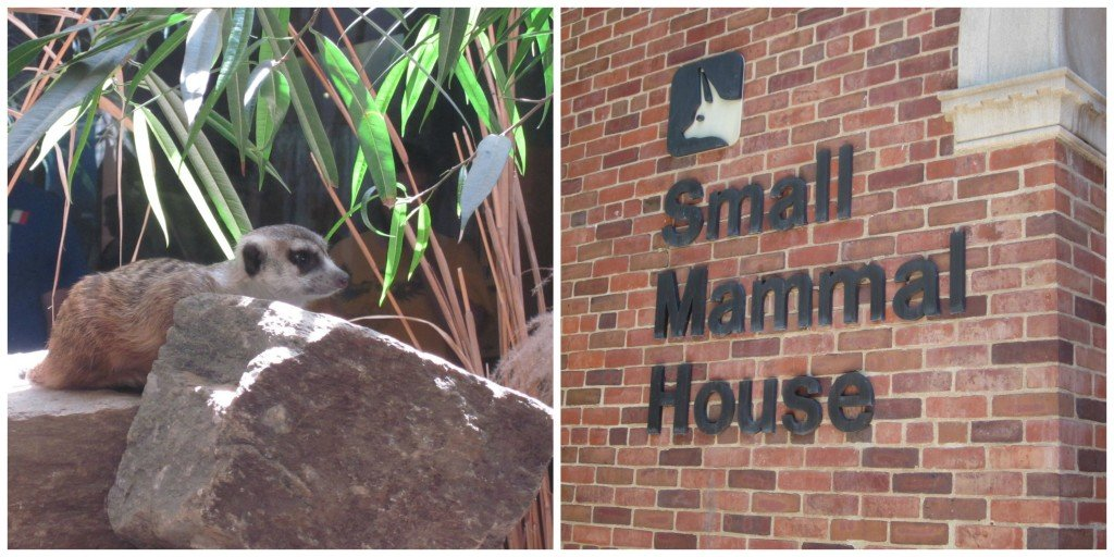 Small Mammal House at the National Zoo in Washington DC - FREE #familytravel destination - MoneywiseMoms