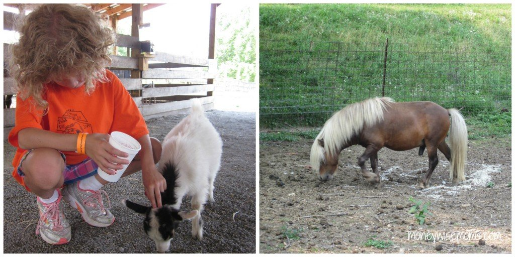 Petting Farm at Great Country Farms - Bluemont Virginia #familytravel - MoneywiseMoms