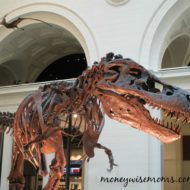 The Field Museum {Chicago, Illinois}
